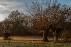 Autumn in Hatfield Forest Country Park