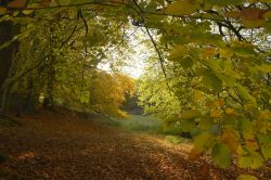 Beech Canopy at Winster, Derbyshire