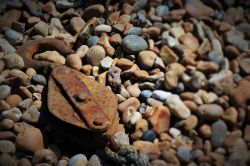 Rusting Away on Hastings Seafront