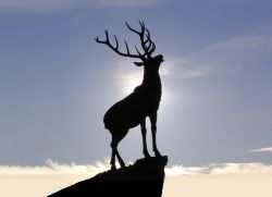 The Hartlepool Stag