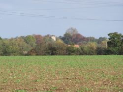 A view of Cratfield church across the field