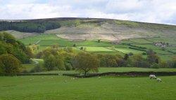 Bransdale near Helmsley