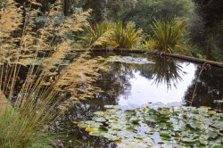 Abbotsbury Tropical Garden