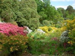 Leonardslee Garden, West Sussex
