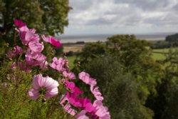 Dunster Castle flowers