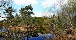 Squabmoor pond