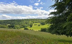 Polesden Lacy, view of the Downs from the Nun's Walk