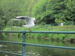 Noisy seagulls