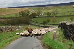 Down to Home Farm (Burnsall)