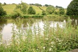 Ball Pond Nature Reserve