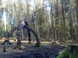 Creative woodland