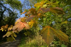 Turning Leaves at Ecton, Staffordshire Wallpaper