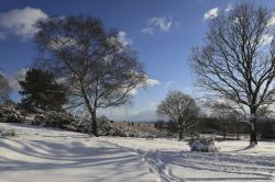Ashdown Forest in the Snow
