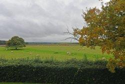Boscobel House - view from gaarden