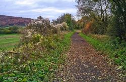 North Dorset Trailway Nov. 2019