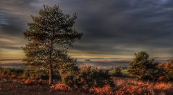 Early Morning, Ashdown Forest