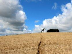 Raddon Hills,