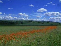 Burythorpe Poppies