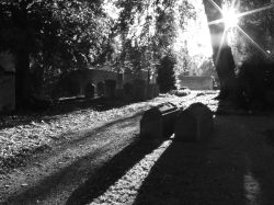 Peterborough Cathedral Churchyard In Black and White