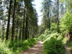 Hustyn woods