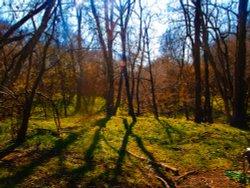 Rivey Wood