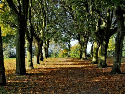 Cudworth Park