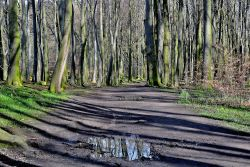 Wombwell Woods