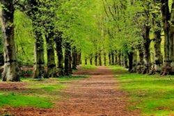 Clumber Park, Worksop