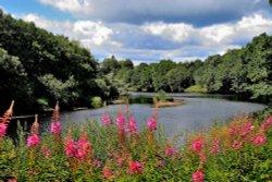 River North Tyne, Bellingham