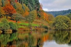 Autumn in the Dalby Forest