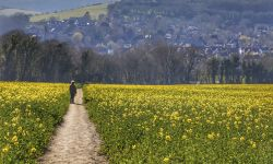 Footpath through a Rape Field in Alfriston, East Sussex