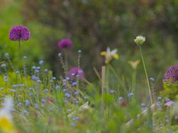 Cottage Gardens, Kent