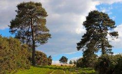 Near Wrens Warren Valley, Ashdown Forest, East Sussex