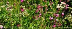 Roadside Plants, Littleton Drew Lane, Acton Turville, Gloucestershire 2020 Wallpaper