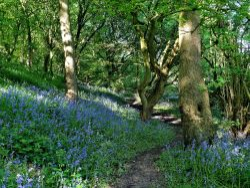 Storrs Wood, Cudworth