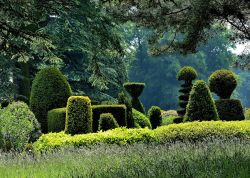 Topiary, Brodsworth Hall