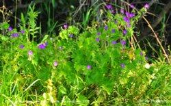 Plants, Littleton Drew Lane, Acton Turville, Gloucestershire 2020 Wallpaper