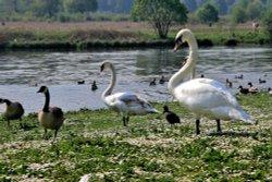 Lake at Clumber Park, Worksop