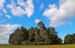 Greenwood Gate Clump, Ashdown Forest