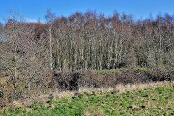 Holllins Wood, Cudworth