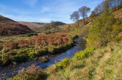 Barle valley, Simonsbath, Exmoor