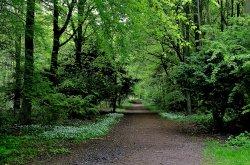 Melton Wood near Doncaster