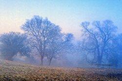 Cold misty morning near Ampthill