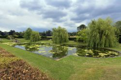 Godinton House Garden Lily Pond , Great Chart
