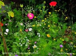 Wildlife Flower Garden, Acton Turville, Gloucestershire 2020. Wallpaper