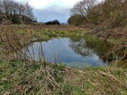 Pond near Storrs Wood, Cudworth