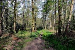 Bagger Wood near Barnsley