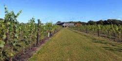 Hush Heath Winery, Staplehurst