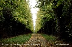 Old Coach Road, Verge Wood, Badminton, Gloucestershire 2001