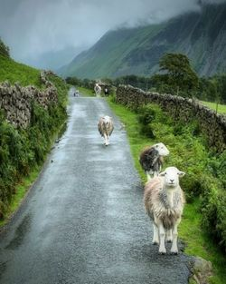 Perfect Traffic Jam    Lake District